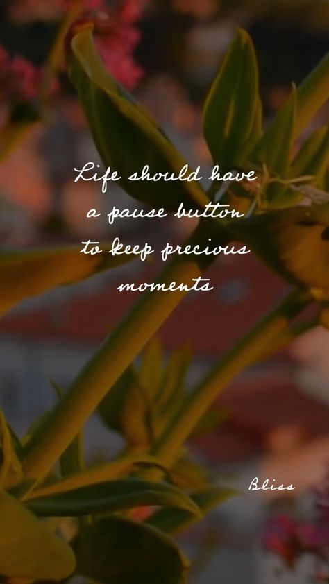 Life should have a pause button to keep precious moments