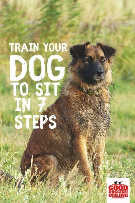 If You Have A New Puppy Or Older Dog Here S An Easy Way To Teach