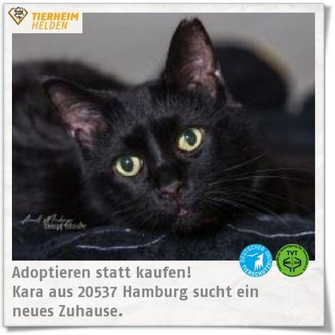Pin Auf Tierheim Tiere Adoptieren Tierheimhelden