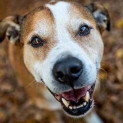 Pin On Animals That Need Love And A Home