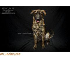 Perros Machos En Adopción España Santa Cruz De Tenerife Tenerife Tango Adopción Albergue Valle Colino Trend Dogs Animals