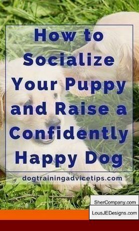 Teach Dog To Stop Nipping And Pics Of How To Train Your Dog To