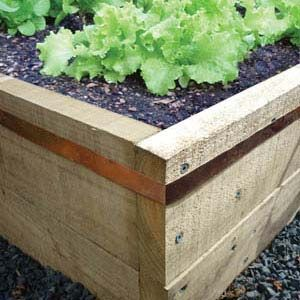 *** Copper tape around raised beds to keep slugs out - Smart Clever