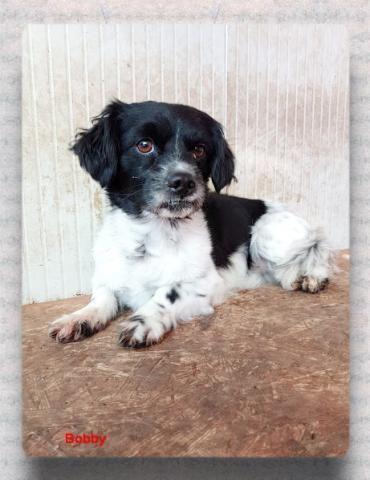 Hund Havanesen Mix Reinrassig Rude 5 Jahre Ungarn Bobby Hunde Haustiere Tierheim