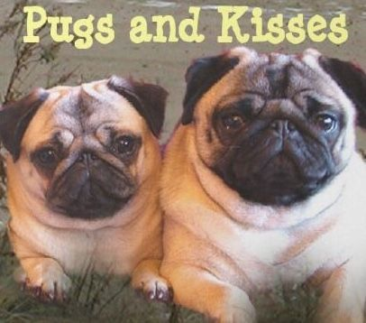 Pin By Captaindave7 On Pug Pugs Kisses Pugs Pug Breeders