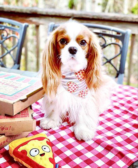 #pizza #bandana #nationalpizzaday #aesthetic #dogsofinstagram #dog