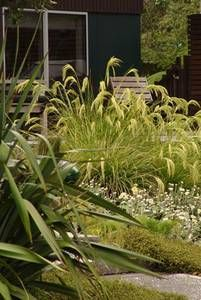 gardening with native plants new zealand plant conservation network - Native Garden Ideas Nz