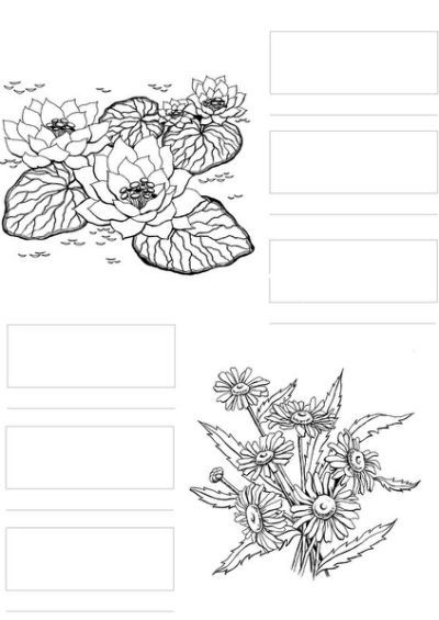 - Colouring Sheets, Spectrum Noir Copic Marker Art, Copic Markers Tutorial, Coloring  Pages