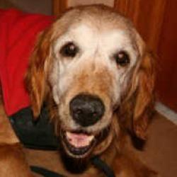 Kali Is An Adoptable Golden Retriever Dog In Minnetonka Mn