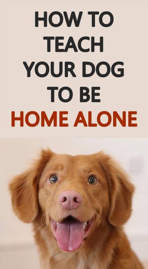 Pin By Barbara Rishel On Dog Days Dog Training Dogs Training