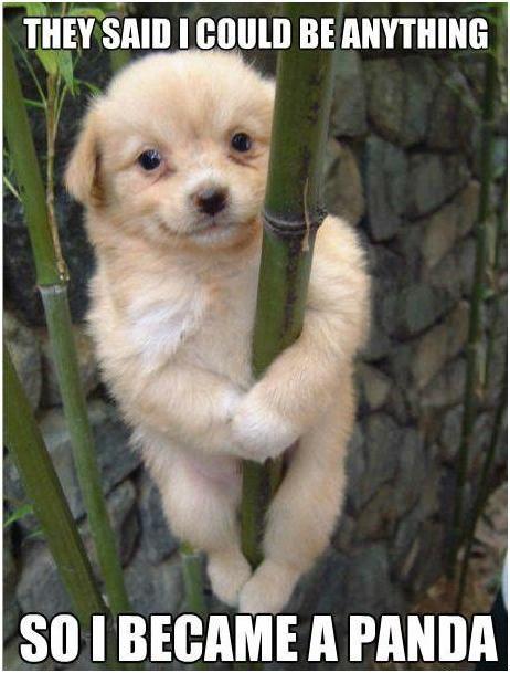 Dog Jokes Google Search Animal Jokes Funny Dog Pictures