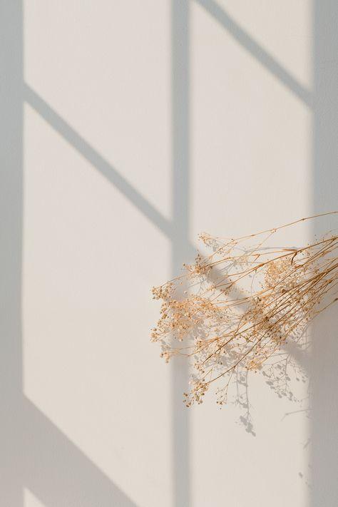 Dried gypsophila with window shadow on a beige wall | premium image by rawpixel.com / Teddy Rawpixel Aesthetic Pastel Wallpaper, Aesthetic Backgrounds, Aesthetic Wallpapers, Blog Backgrounds, Abstract Backgrounds, Abstract Art, Cream Aesthetic, Flower Aesthetic, Boho Aesthetic