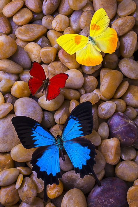 Three Colorful Butterflies Photograph by Garry Gay