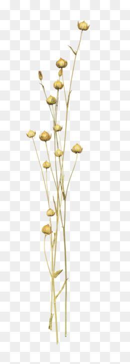 Wild Flowers Png Image Overlays Picsart Flowers Wild Flowers