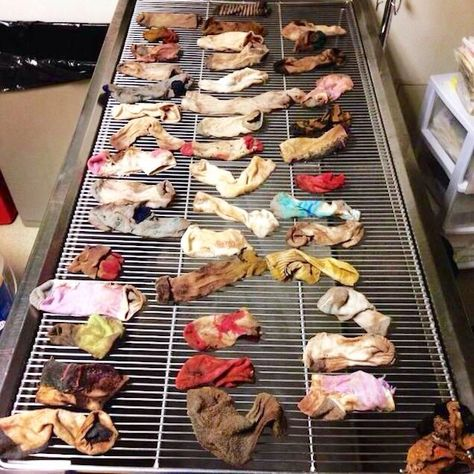 Doofus Dog Great Dane Ate 43 Socks And Had To Have Them Surgically