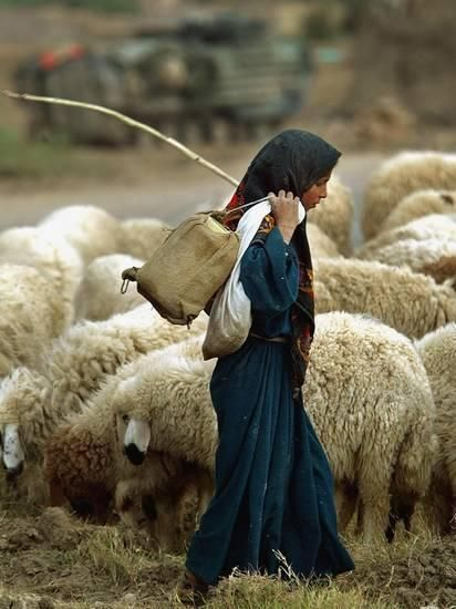 An Iraqi Shepherd, a Young Girl, Herds Her Sheep Photographic Print at AllPosters.com