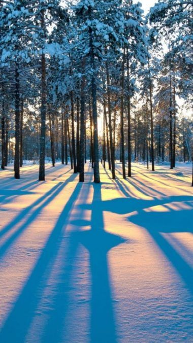 Pin By Setaswall On Phone Wallpapers Winter Scenery Winter Landscape Winter Forest