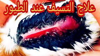 التعريف بالتسيف و طريقة علاج الطيور منه Https Ift Tt 35jugdq