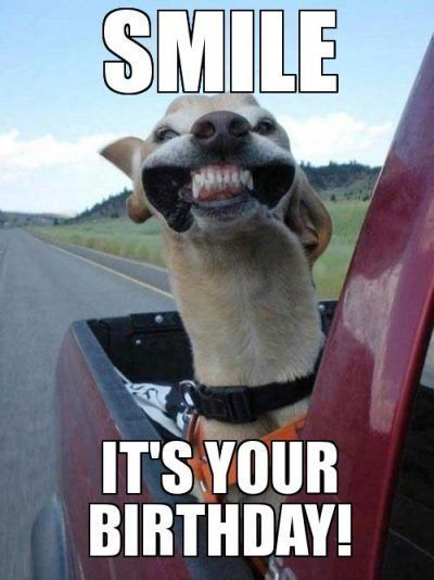 50 Happy Birthday Coffee Memes And Funny Images Happy Birthday Animal Meme Cute Animals Happy Dogs Animals