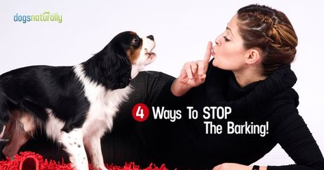 Do you have a barking dog on your hands? As a dog trainer, I find barking problems are one of the main reasons dog owners ask for help. Clients want to know how to stop their dog from barking. In this article, I'll help you get the peace and quiet you're looking for in your... Continue Reading