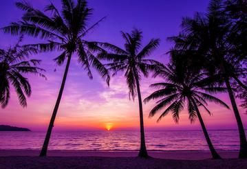 Summer Holiday Blue And Purple Sky With Palm Tree Sandbeach And Sunset Backdrop Hu0178 Sunset Images Sunset Beach Pictures Palm Tree Sunset
