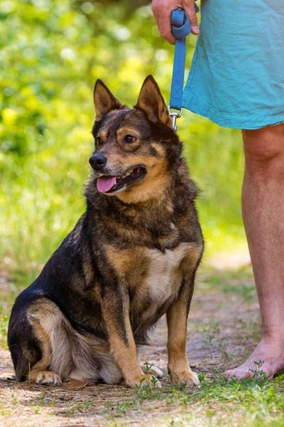 How To Train Your Dog To Stay By Your Side Dog Training
