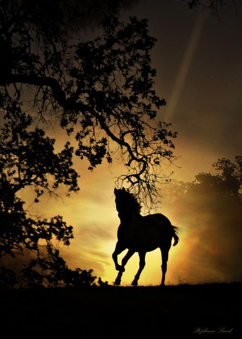 Horse Photograph - Golden by Stephanie Laird