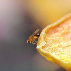 Pin Auf Ameisen Umdiedeln