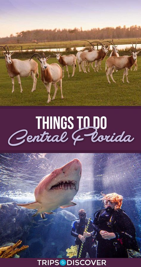 13 Best Things To Do In Central Florida With Kids Tripstodiscover Florida Activities Florida Adventures Central Florida