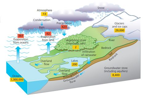 Diagram of hydrological cycle | Gcse geography, Water ...