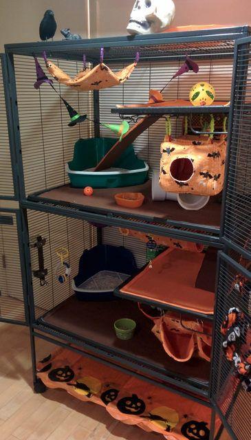 your Hallowe'en cage decor! - Page 3 Hamsters, Ferrets Care, Cute Ferrets, Cute Rats, Pet Ferret, Ferret Toys, Rata Dumbo, Sugar Glider Cage, Sugar Gliders