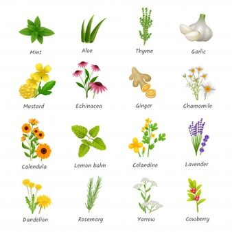 Curacion De Hierbas Y Plantas Medicinales Iconos Planos Dibujos De Plantas Medicinales Plantas Medicinales Imagenes De Plantas
