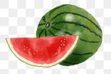 Hand Drawn Summer Food Watermelon Png Summer Fruit Fruit Watermelon Summer Fruit Watermelon Summer Fruit Juice