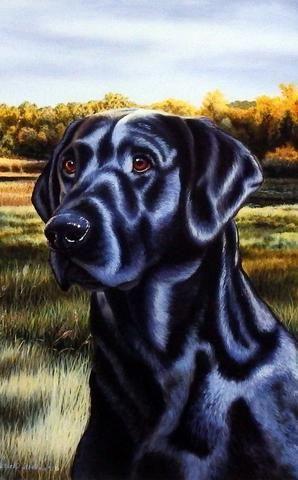 Michael Steddum Black Lab Labrador Retriever Labrador Labrador Retriever Puppies