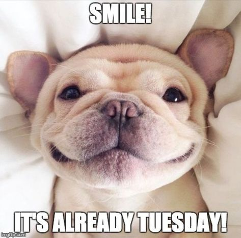 15 Happy Tuesday Memes - Best Funny Tuesday Memes