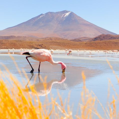 le sud lipez, bolivia