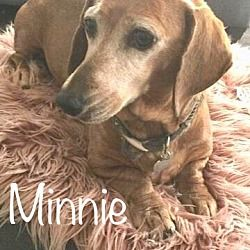 Available Pets At Dachshund Rescue Of Los Angeles In Los Angeles