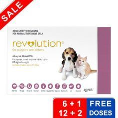 Revolution For Kittens Puppies Pink 3 Doses Animal Treatment