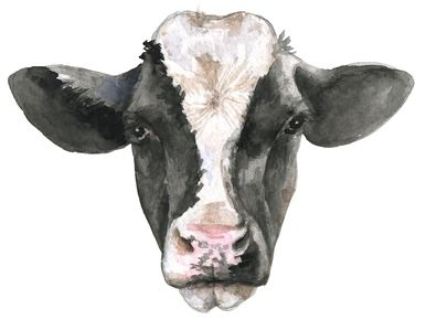 Black White Cow Face Sublimation Farm Country Watercolor Digital Png White Cow Cow Face Cow