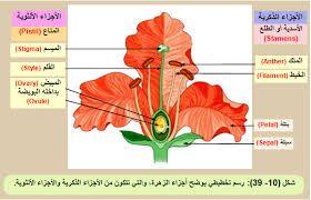 نتيجة بحث الصور عن تكاثر النباتات