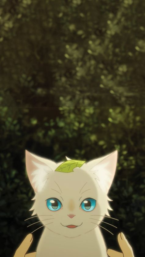 Cat anime wallpaper