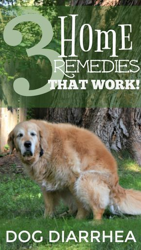 What To Do When Your Dog Has Diarrhea 3 Simple Home Remedies Hunde Susse Hunde Alter Hund