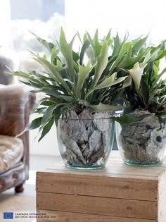 Hertshoorn Varen Kamerplanten Planten Kamerplant Decor