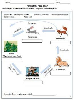 Carnivores Herbivores Omnivores Food Chain Animal Feeding