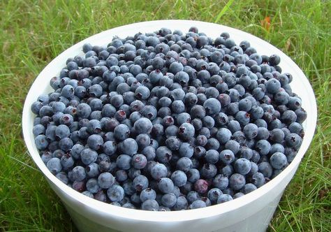 Blueberries And Dark Stool - Stools Item