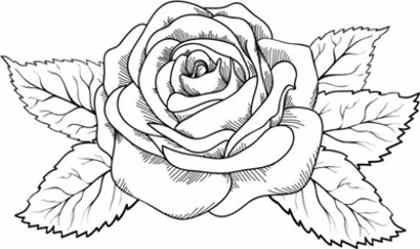 Rosas Para Colorear Dibujos De Rosas Tatuajes De Rosas Para Hombres Dibujos Flores Para Colorear