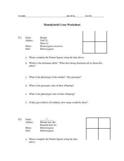 Monohybrid Cross Practice Problems Worksheet - worksheet