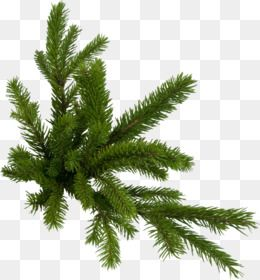 Christmas Tree Branch Png Download 1200 802 Free Transparent Fir Png Download C Christmas Tree Branches Christmas Tree Background Cartoon Christmas Tree