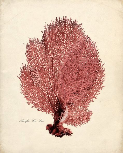 Sea Coral Print from Vintage by the Shore on etsy