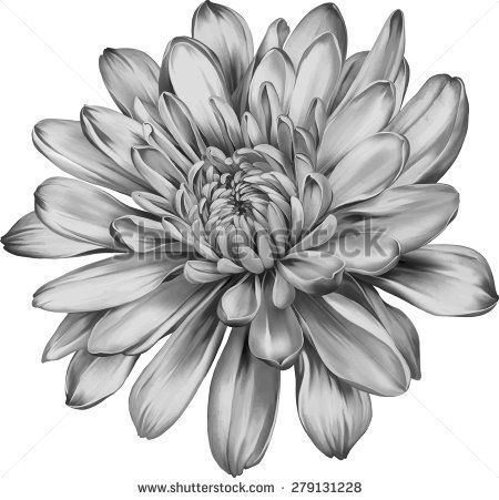 Chrysanthemum Flower Outline 20 Awesome Tattoo Designs Di 2020 Tato Drawings